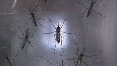 Zika-jpg_20160202180503-159532