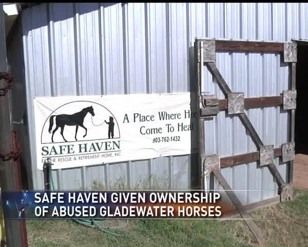 Horse seizure update_22412258-159532