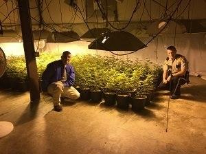marijuanaplants_1457454376971.jpg