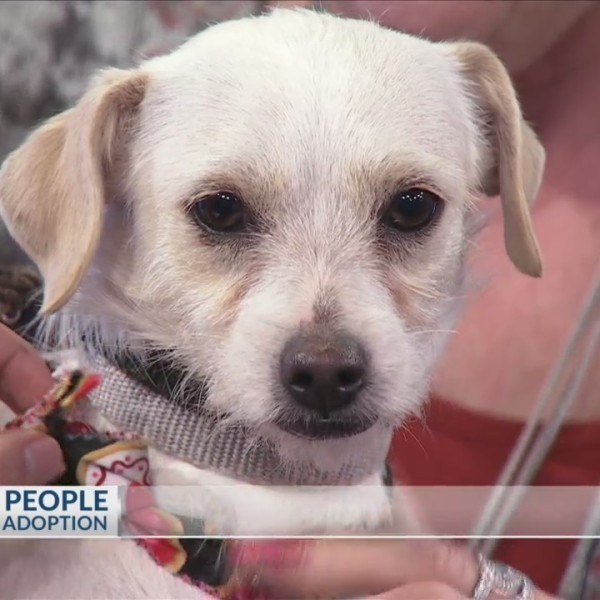 Pets_Fur_People_needs_a_home_for_Piper_0_20180201132841