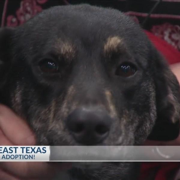 SPCA_of_East_Texas_0_20180202151710