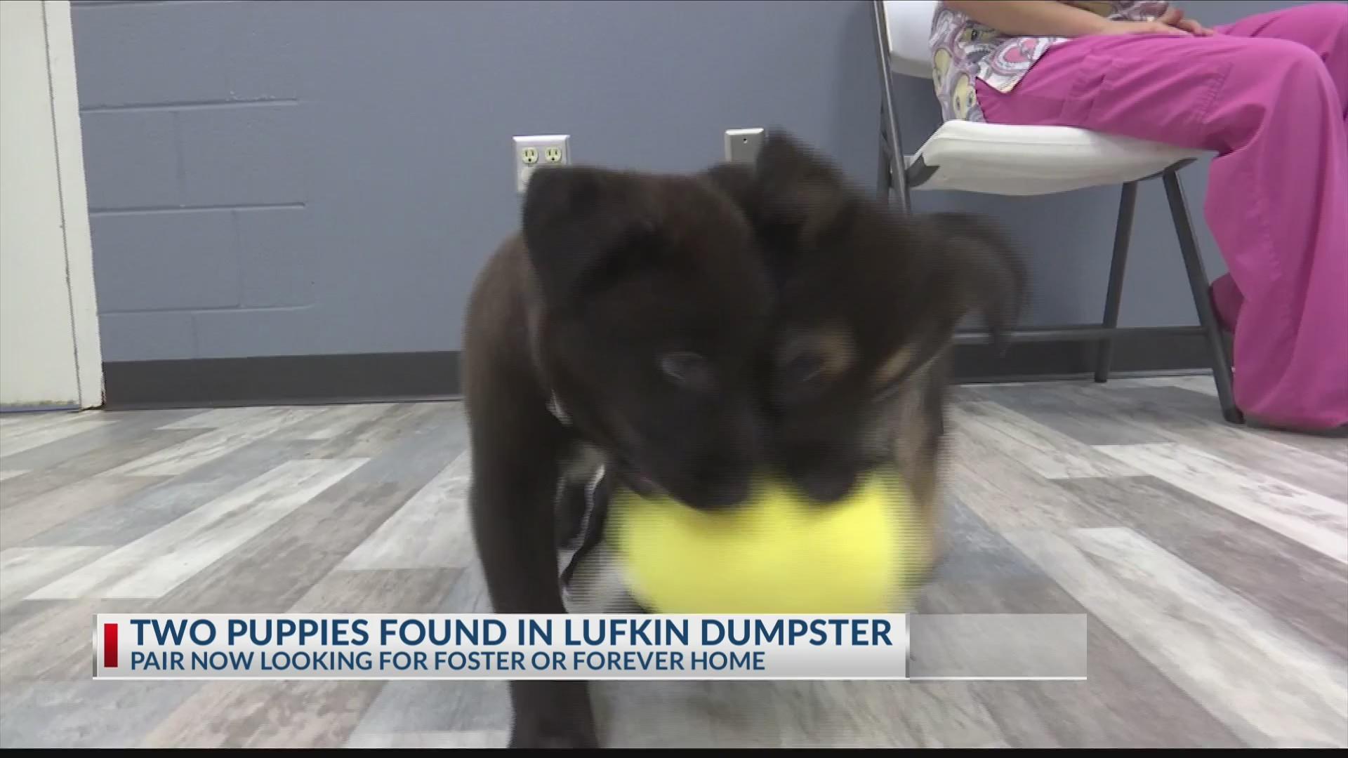 Puppies found in Dumpster