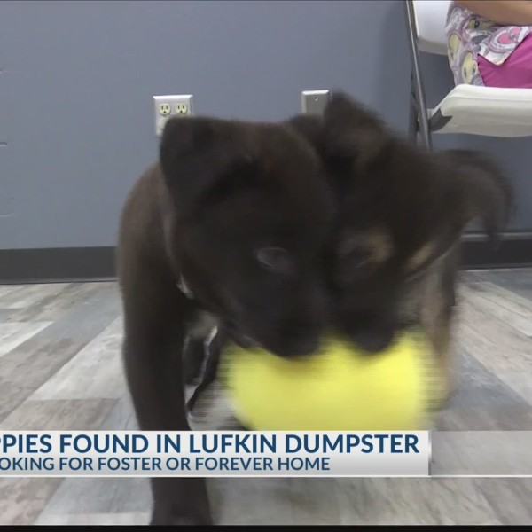 Puppies found in Dumpster