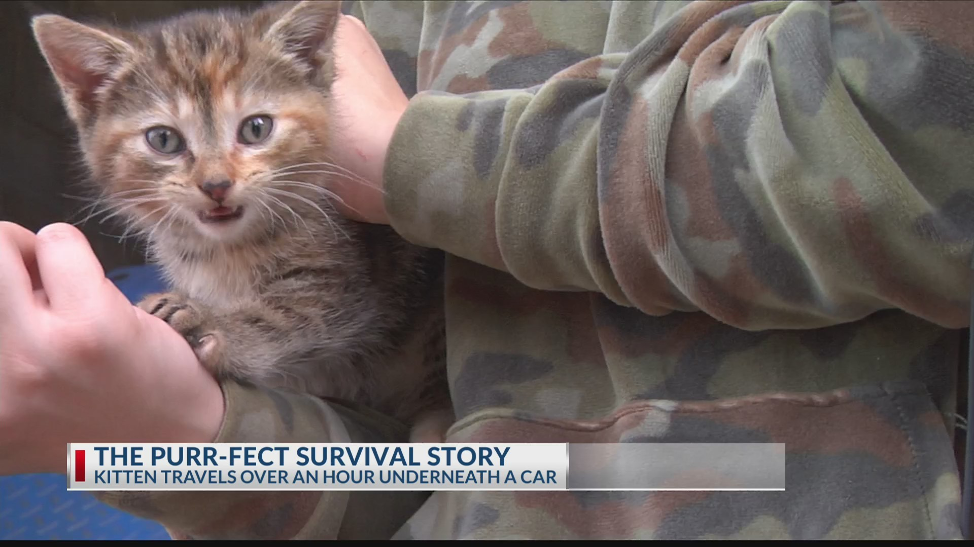 THE_PURR_FECT_SURVIVAL_STORY_0_20190502034103