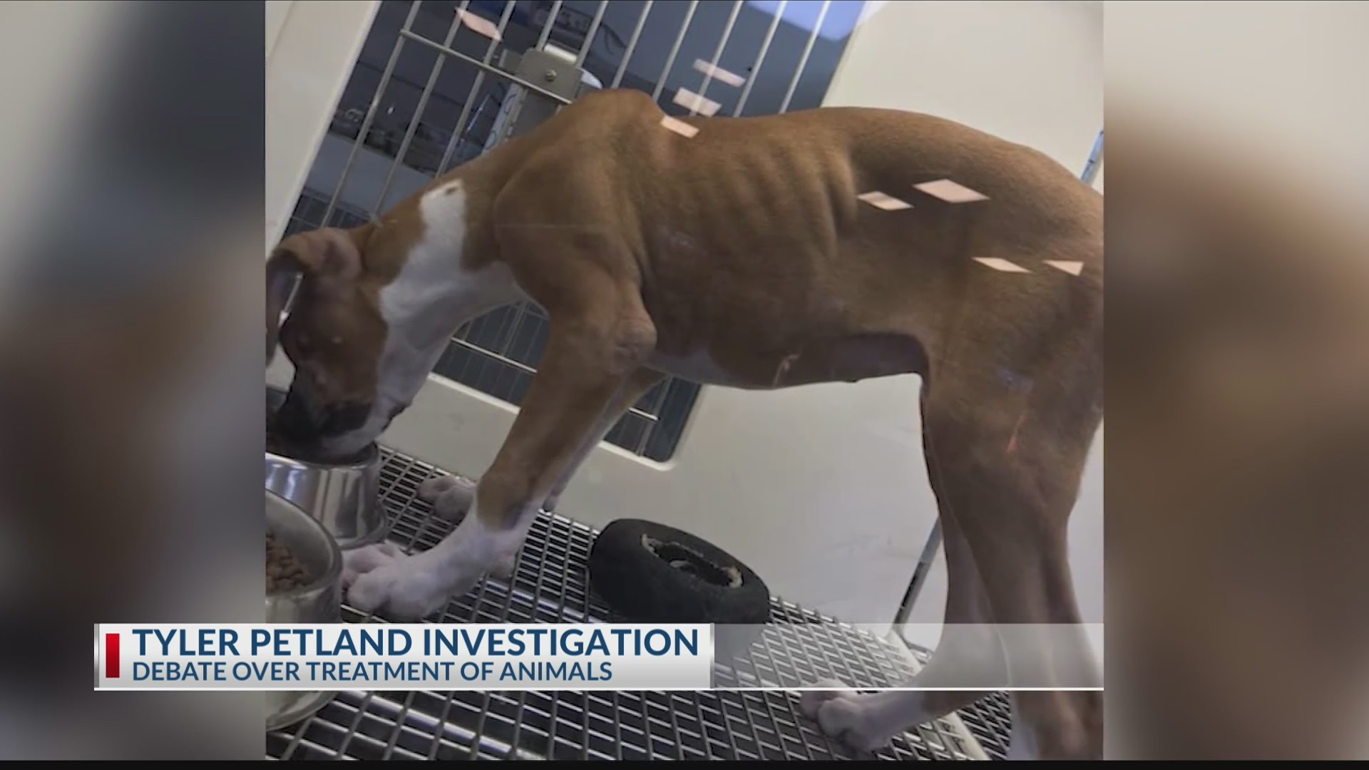 PETLAND_INVESTIGATION__Local_veterinaria_0_20190611031833