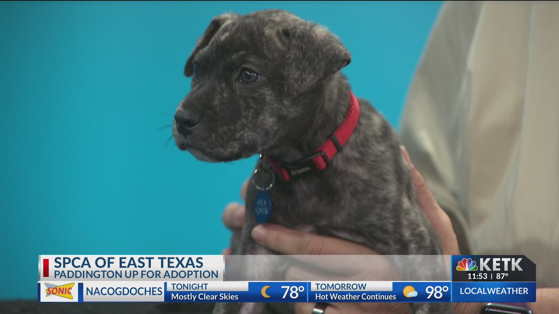 SPCA of East Texas comes by to show off a new furry friend